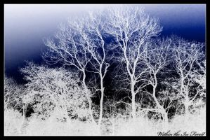 Within the Ice Forest by DreamMedia-UK