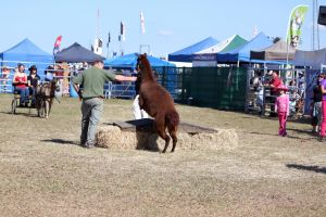 farmfest_2010_6123 by craigp-photography