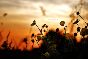 Sunset Flowers by Hersmallworld