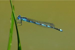 Dragonfly by mordoc-stock