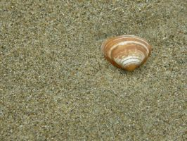 sea shell 2 by maryllis-stock