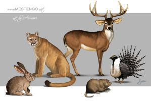 Animal friends - for Mestengo by Aomori