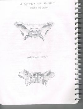 sphenoid by exponentially-random