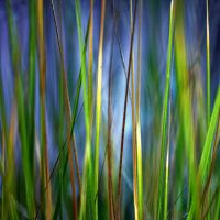green curtain by augenweide