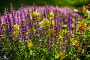 Mix of Yellow and Purple HDR by mjohanson