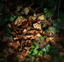 autumn leaves by mariannizmo