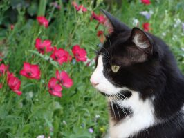 Cat flowers III by fairling-stock