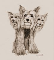 Yorkshire Cerberus by Typthis