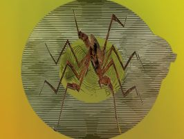The Moire_The Web_The Spider by Urceola