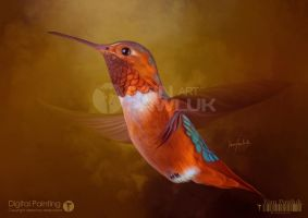 COLIBRI by ipawluk