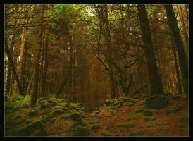 Deep Into The Forest 2 by Forestina-Fotos