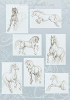 Horse Sketches by Agaave