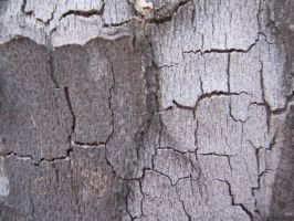 Tree Bark by element321