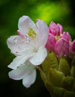 Flowers 2014 by Nathan-Ruby