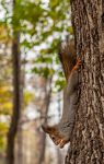 Squirrel3 by NRichey
