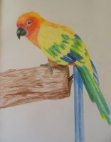 Sun Parakeet by multicolour