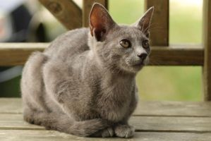 Cat Stock 079 by Malleni-Stock