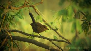 In-the-Wild by Anshul-Sharma