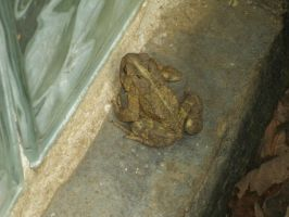 Toad in the Window Well by SacredJourneyDesigns