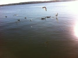 Birds on the Water by Q99