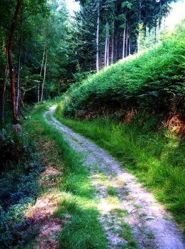 Winding Forest Path by Forestina-Fotos