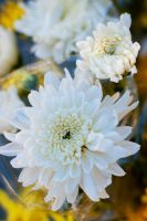 Purity by inzanenewbie