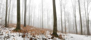 Forest Panorama by mARTinimal