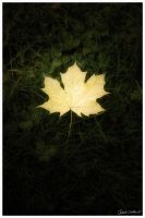Autumn leaf by abus