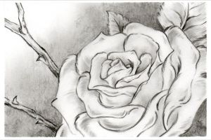 Roses 07-24-13 by Sultzaberger