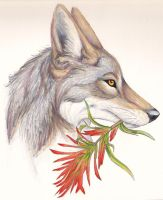Coyote's Paintbrush by CaptainMorwen