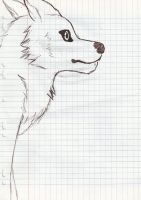 Speed Draw : Looking far away wolf by LuckyWolf27