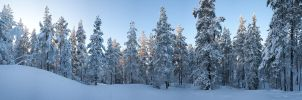 Snow forest by JuhaniViitanen