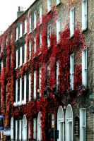 Red Ivy by SweetNerdyCakes