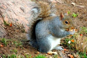 Project 365 - 059 - Nuts About Nuts by jguy1964