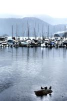 Vancouver 'burbs:  Deep Cove Marina by basseca