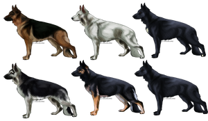 German Shepherd Imports REALISTIC CLOSED by Angye98