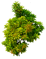 Shrub 01 PNG.. by WelshDragonStockNArt