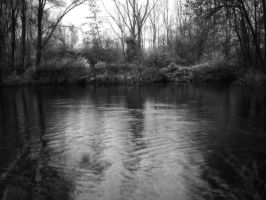 Swamp, Somme, France by JulienHB