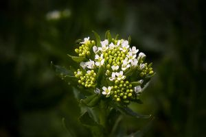 Field flowers by daily-telegraph