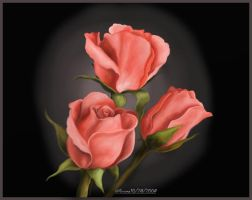 Roses 1 by shirly90