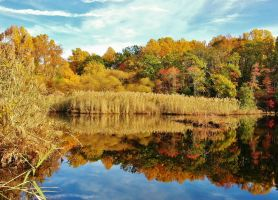 Fall Reflections At Weinberg Park by Matthew-Beziat