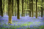 Spring Woodlands by Mohain