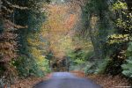 Autumn Road (2016) by MrWitchblade
