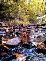 Toccoa Creek by thegreatwolfsage