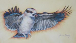 Kookaburra in Flight by JoanneBarby