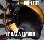 LOL Cat Macro by Tephra76