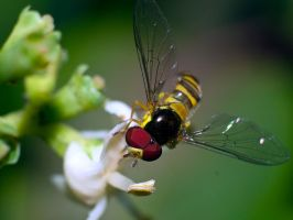 Yellow Fly by Rich33584