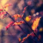 The Golden Leaves by Somebody--else