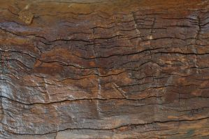 Dry wood texture 2 by BlokkStox