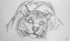 Blue Nose 7 Nostril Siberian Tiger by ZeroNero